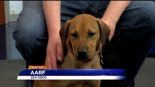 Paws for Pets – AARF
