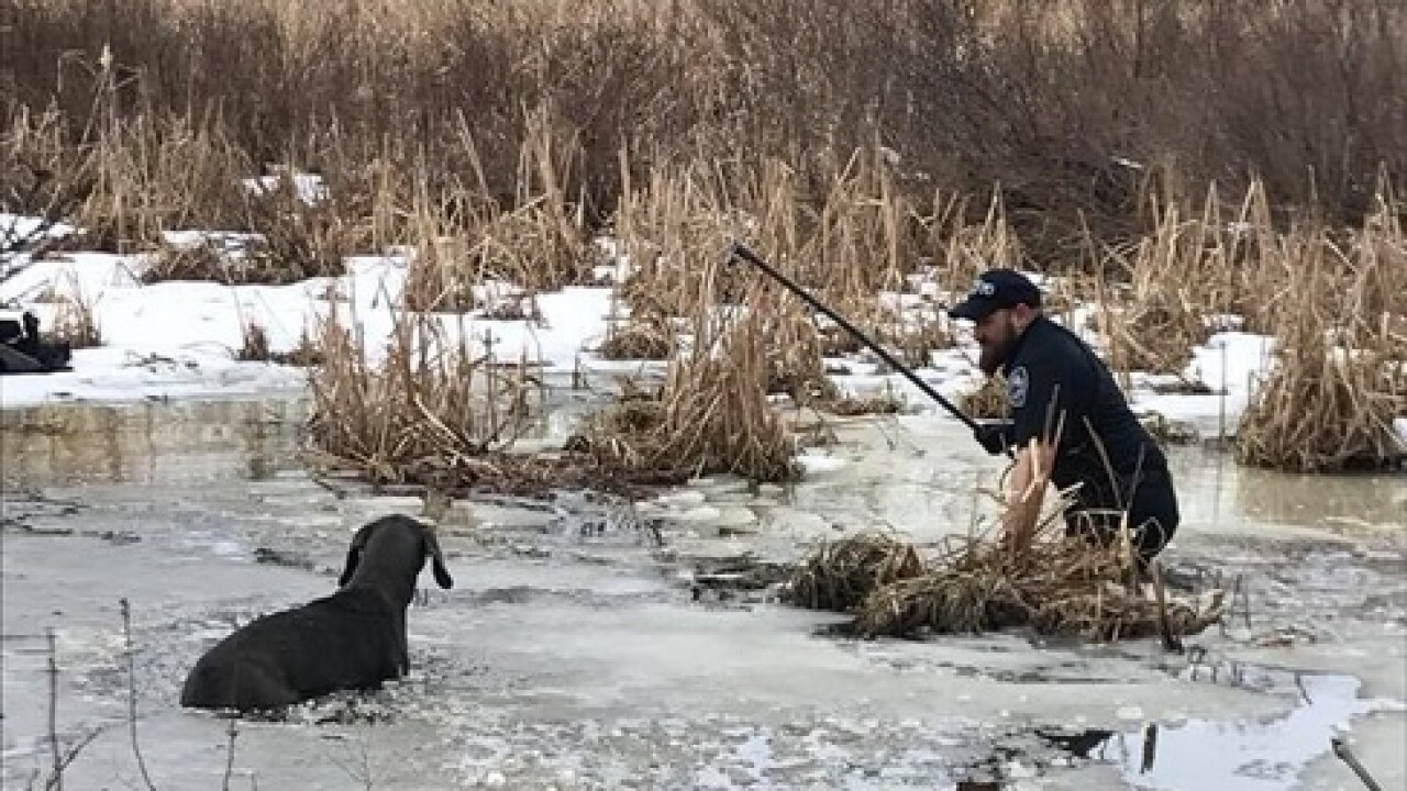 WI police officer rescues dog from icy pond