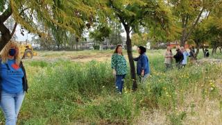 Neighbors rally to save jacaranda trees at site of new Lakeside Library