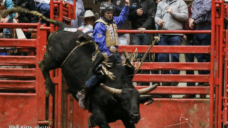 PRCA Bulls Frost.png