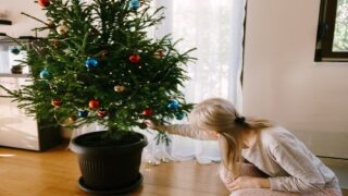 Rent A Live Potted Christmas Tree That Will Be Replanted At The End Of The Season