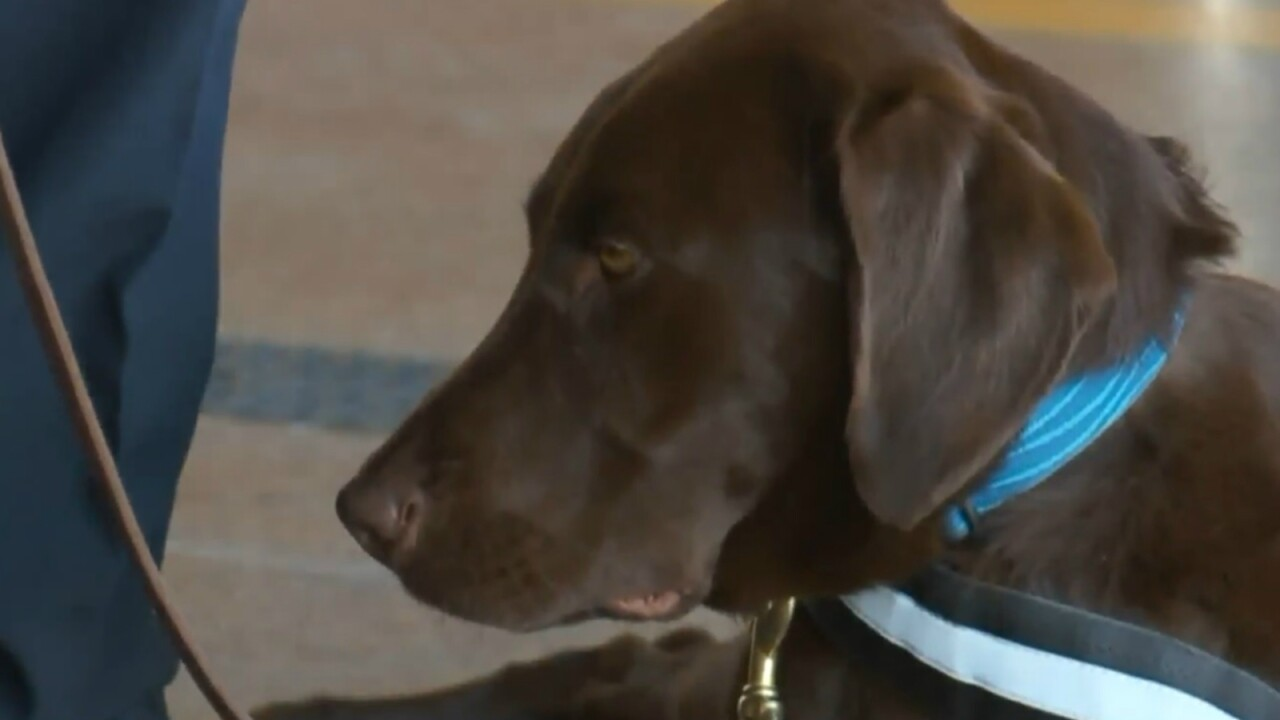 This therapy dog is helping Utah firefighters take care of their mentalhealth