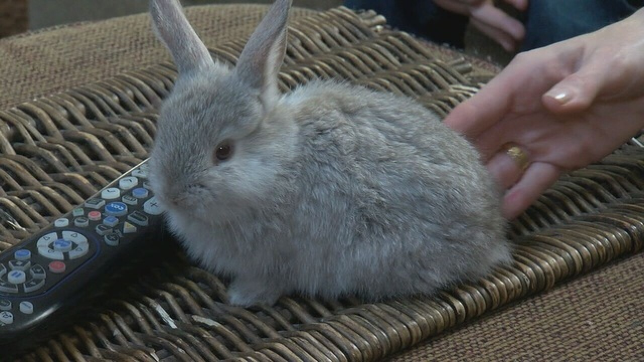 Family needs help after bunnies keep multiplying