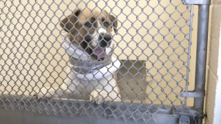 'Clear the Shelters' campaign helps 27 pets find furever homes