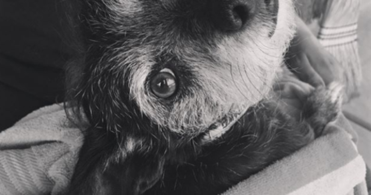 Family dog dies while in the care of a Tucson Petsmart