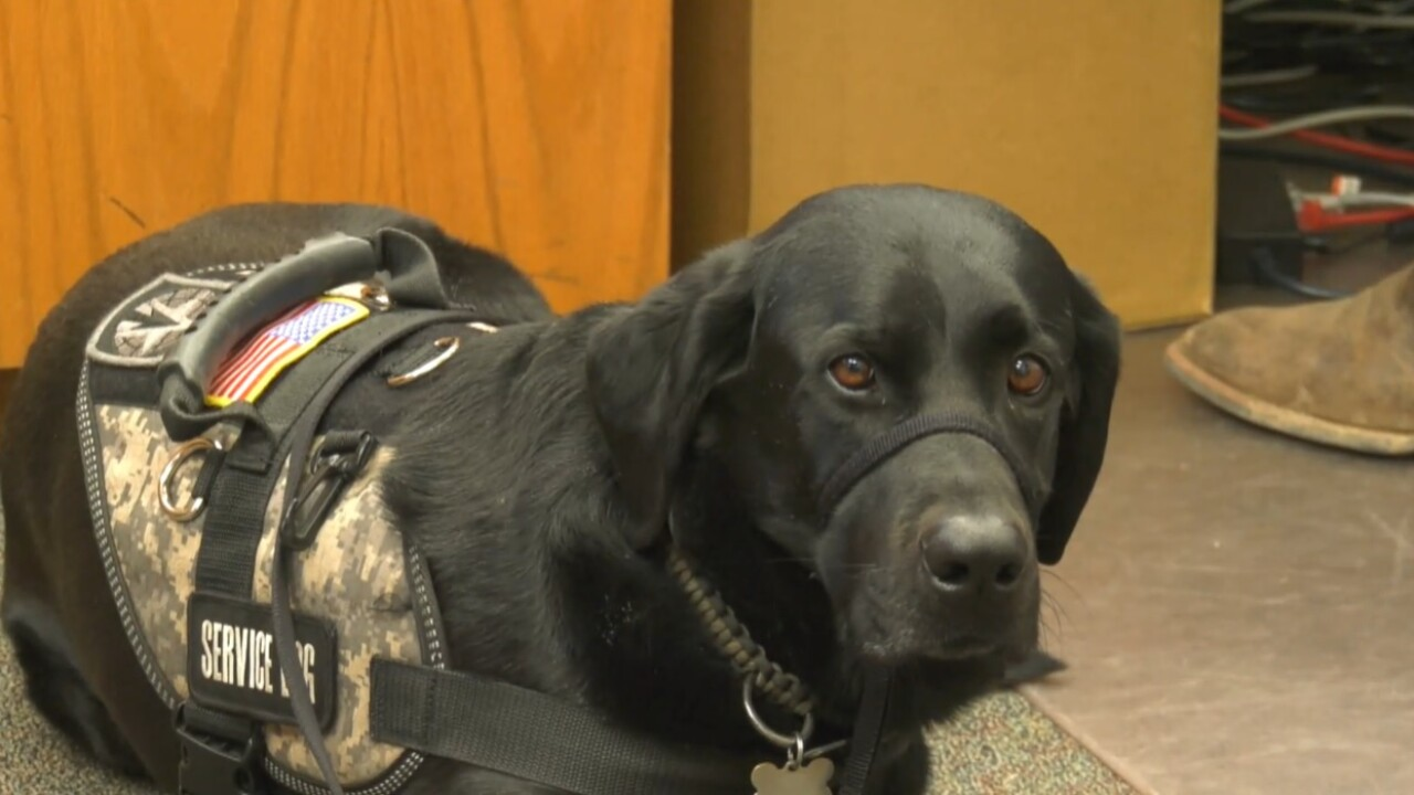 Jake Forman: Black Labrador Service dog