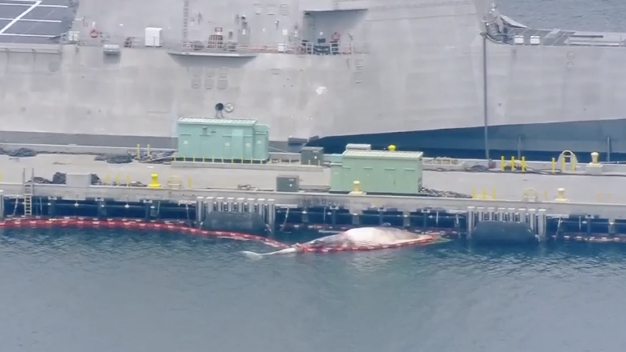 Two fin whales found dead under hull of Australian ship at Naval Base San Diego