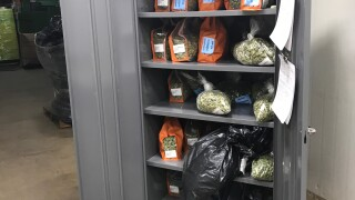 Cannabis Compliance Team Seized Illegally Stored Weed