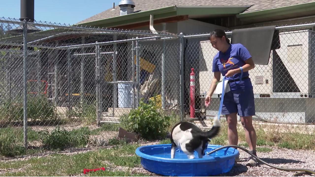 Pet Heat Safety