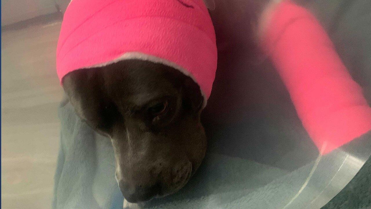 injured-dog1.jpg