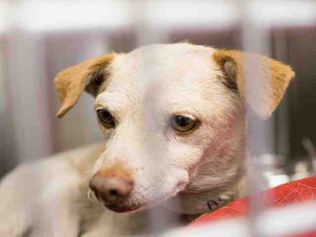 Adoptable pets in the Valley from Maricopa County Animal Care and Control (11/8)