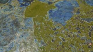 Photos: Algae crisis in Lee County in summer 2018
