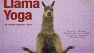This Adorable Llama Yoga Calendar Is Just What You Need For 2020