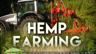 Schexnayder proposes legislation to produce industrial hemp in Louisiana