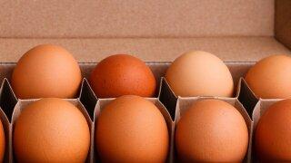 eggs-5616647_1280.jpg