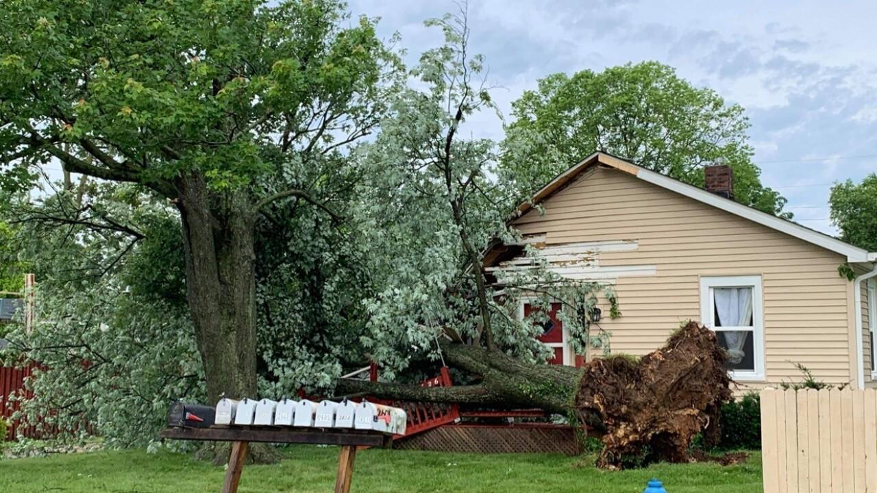 tree on house in bloomington.jpg