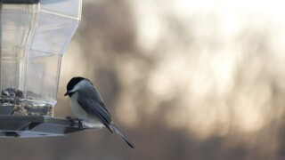 "Menards Home Improvement: ""Attract Birds to your Yard"""