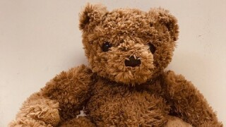 teddy bear - village of allouez.jpg