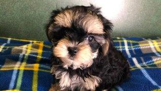 WCPO stolen puppy big.jpg