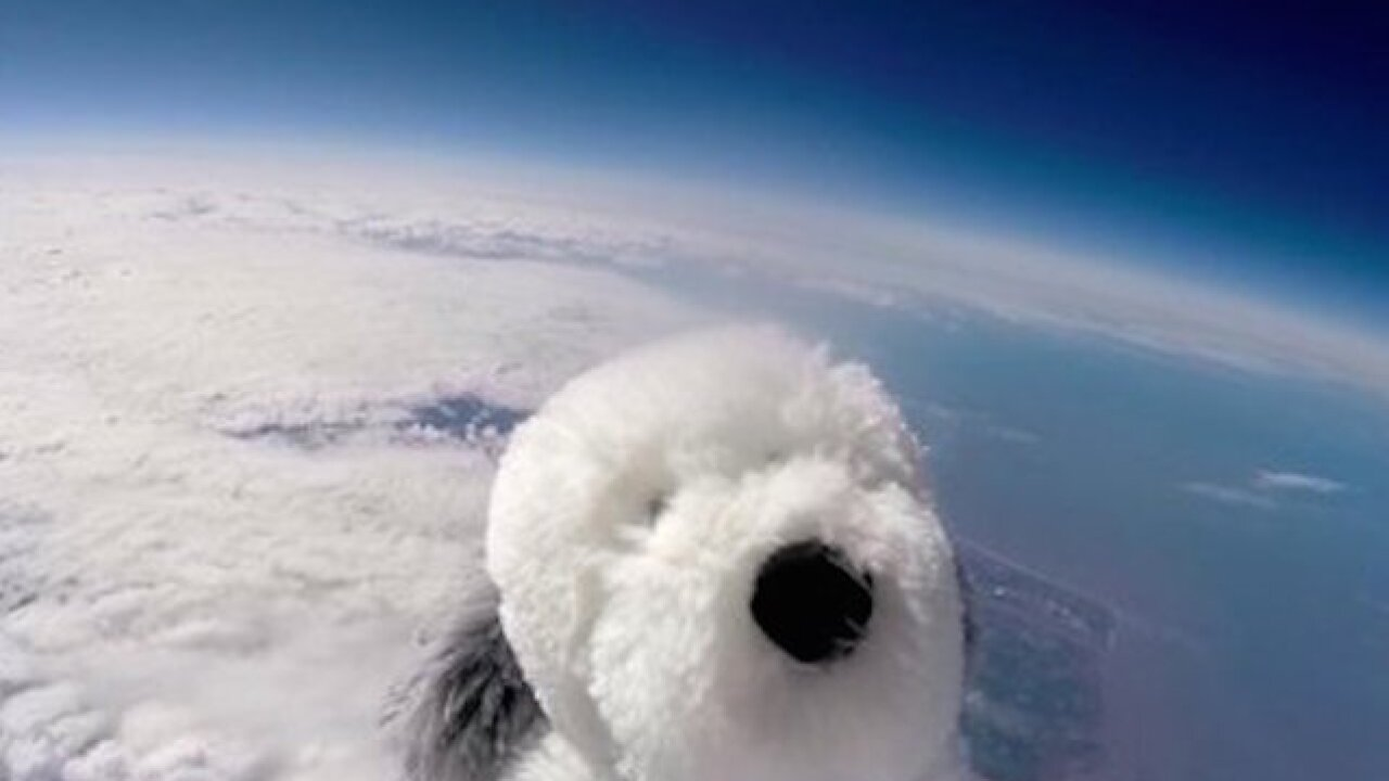 Stuffed dog missing after space flight