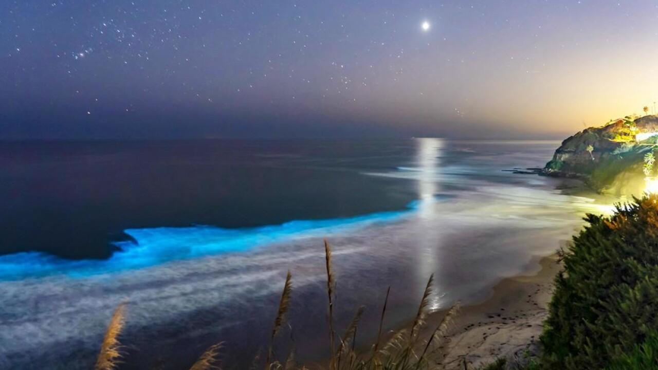 encinitas bioluminescence kyle stock (1).jpg