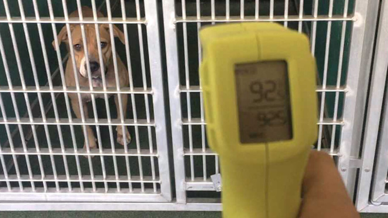 Hot temperatures, hot animals at PBC Animal Care and Control ; director seeking solutions