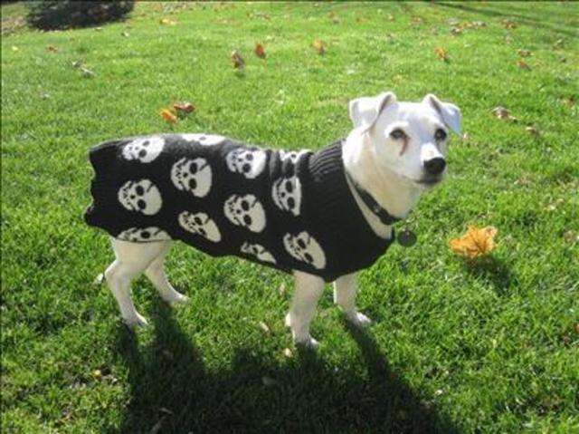 Halloween Pet Costumes Ideas