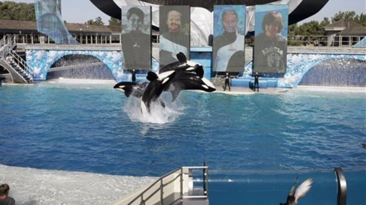 SeaWorld ending killer whale breeding program