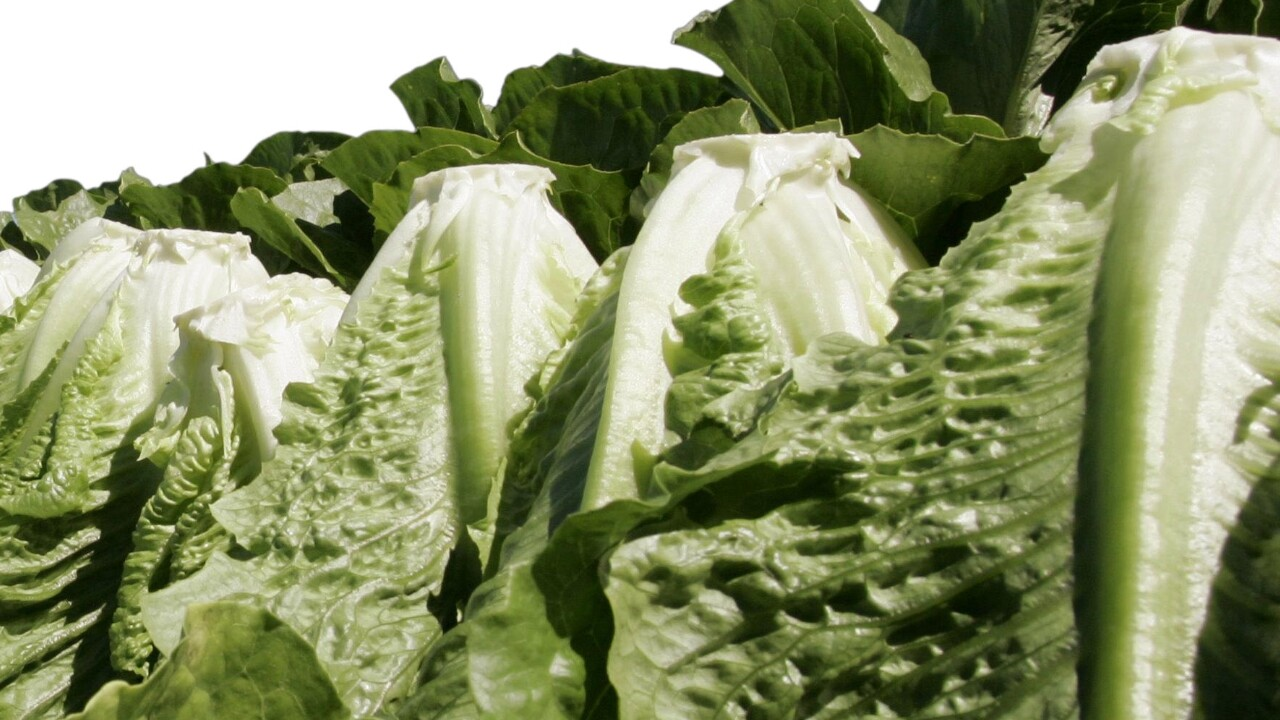 California farm identified as one source of E. coli outbreak linked to lettuce