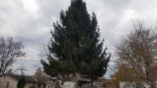 City Of Lexington Finds Its Christmas Tree
