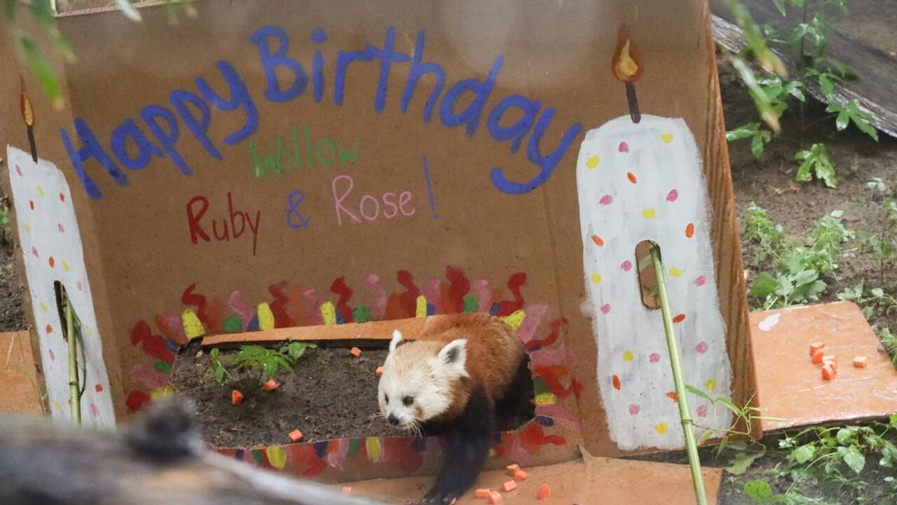 Panda Birthday 1.jpg