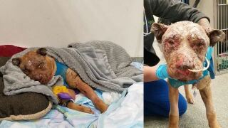 $5,000 reward offered for info leading to arrest in burned dog case in Shelby County