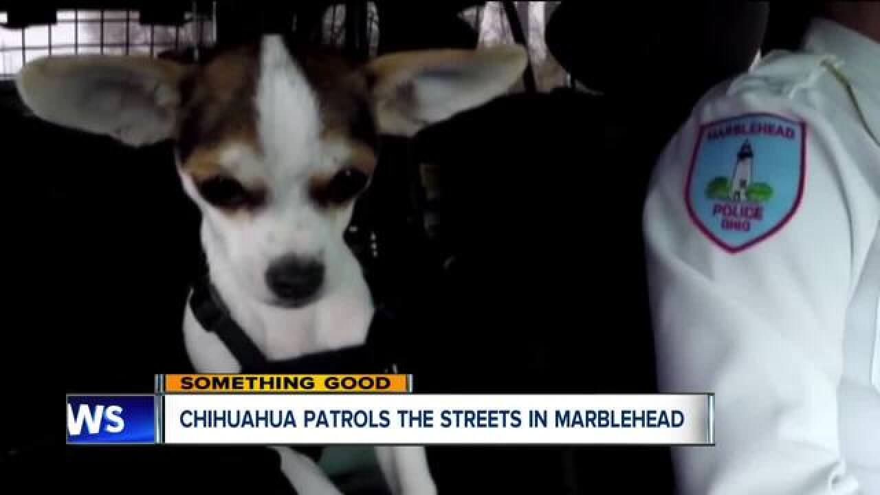 Small rescue dog helps Ohio police department, community