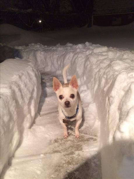 2015-major-snowstorm-1.jpg