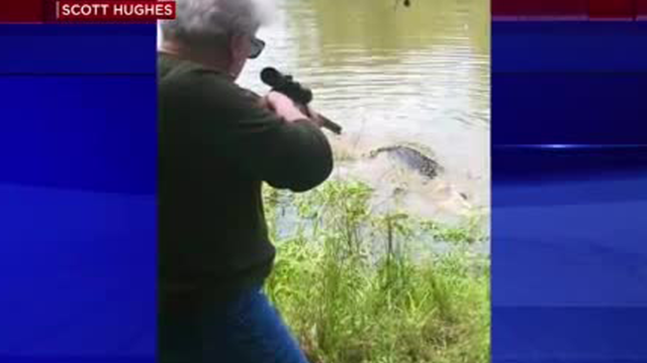 Granny takes care of 12-foot gator