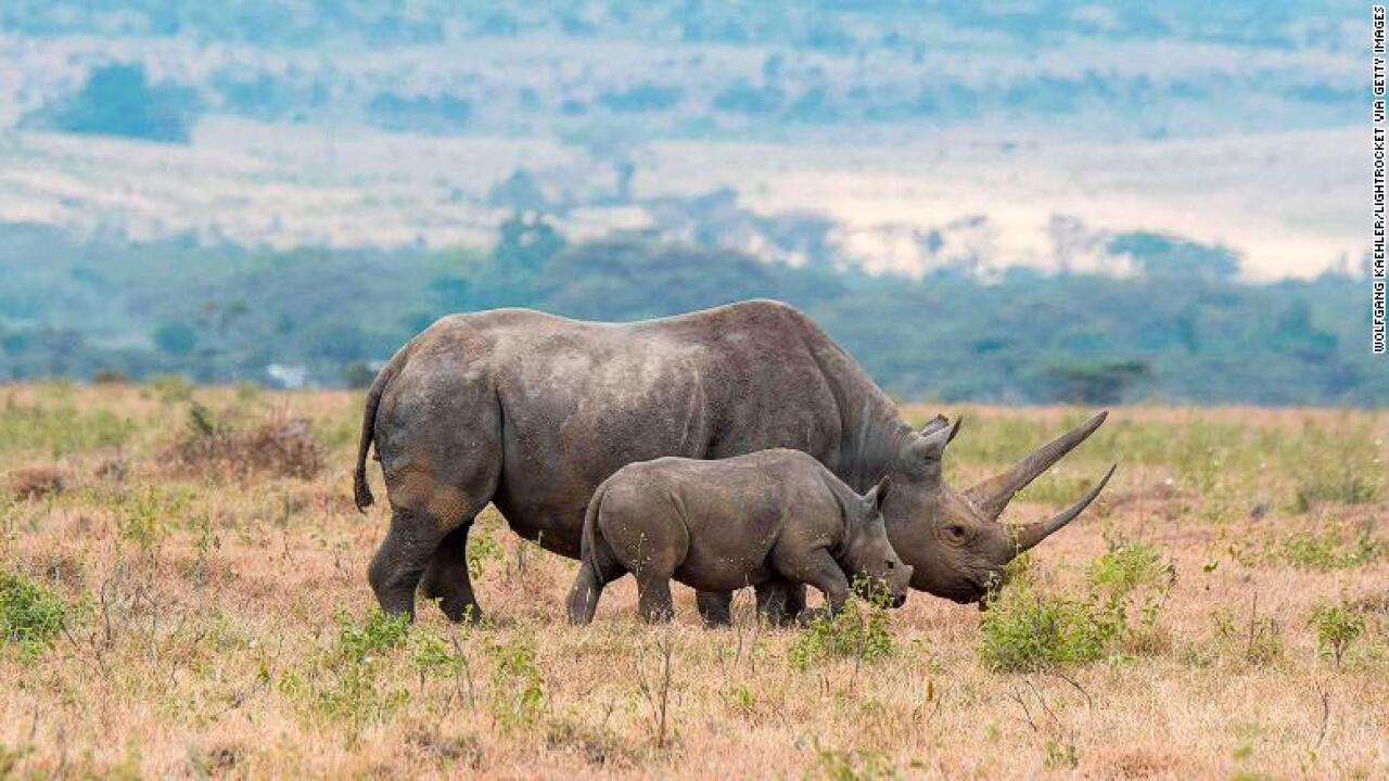 Humans causing shrinking of wildlife as larger animals die off, study says