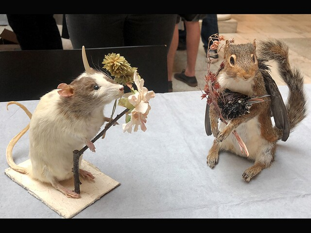 """""""Rogue Taxidermy"""" takes over Walters Art Museum"""