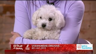 13 Days of Giving: Lovey is living proof that donations to Humane Society of Utah savelives
