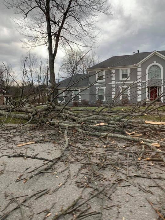 Storm_031419_arge tree down on Whirlaway Drive in Union. Triple Crown neighborhood. .jpg
