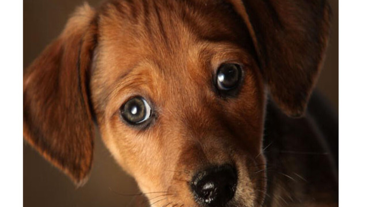 Puppies to blame for drug-resistant infection in 118 people