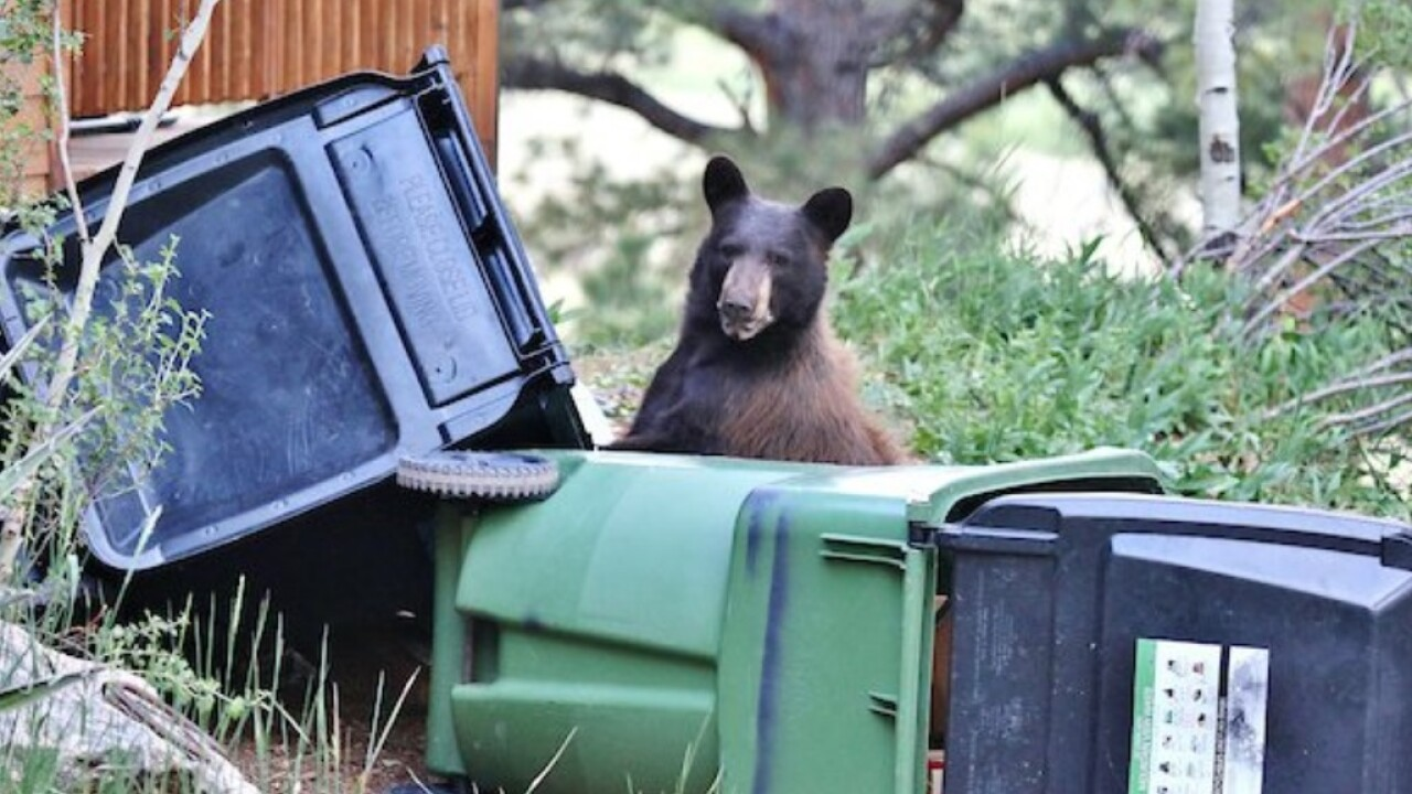 Bear proofing you home