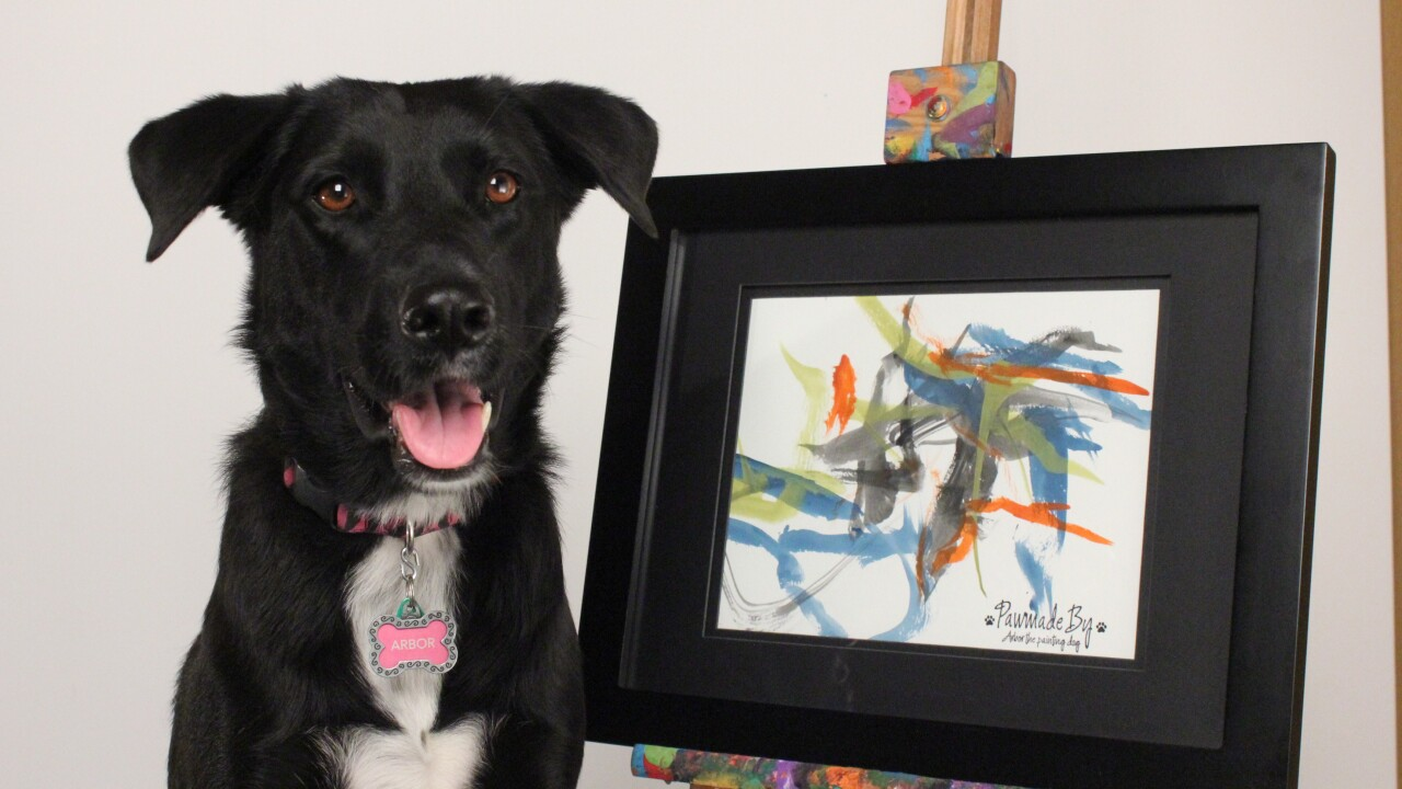 Arbor, the painting dog