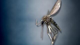 Mosquito file image