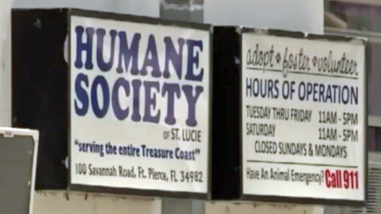 wptv-human-society-of-st-lucie-county.jpg