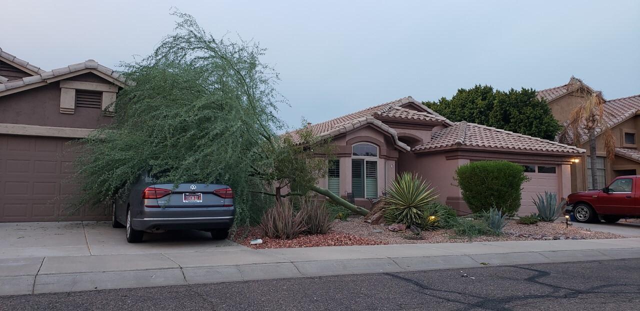 Scottsdale tree topples over