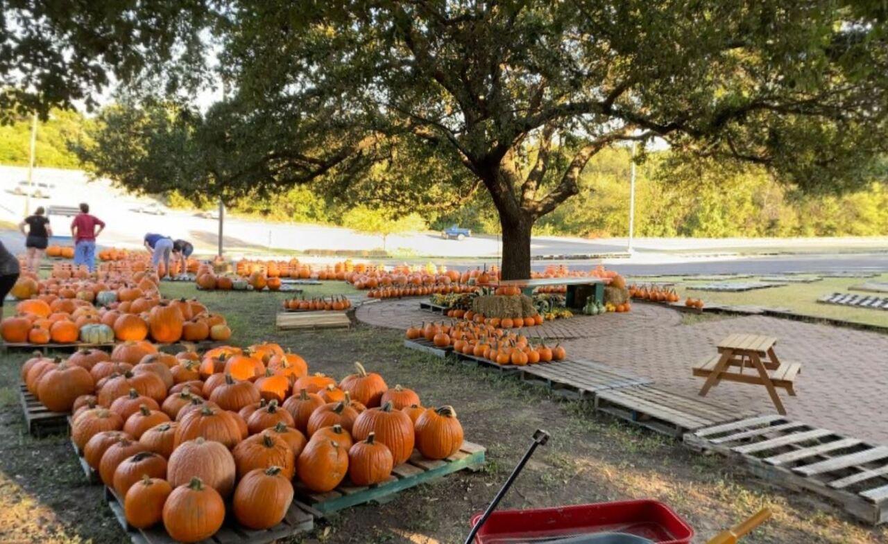 The Pumpkin Patch at Central Christian Church-Waco