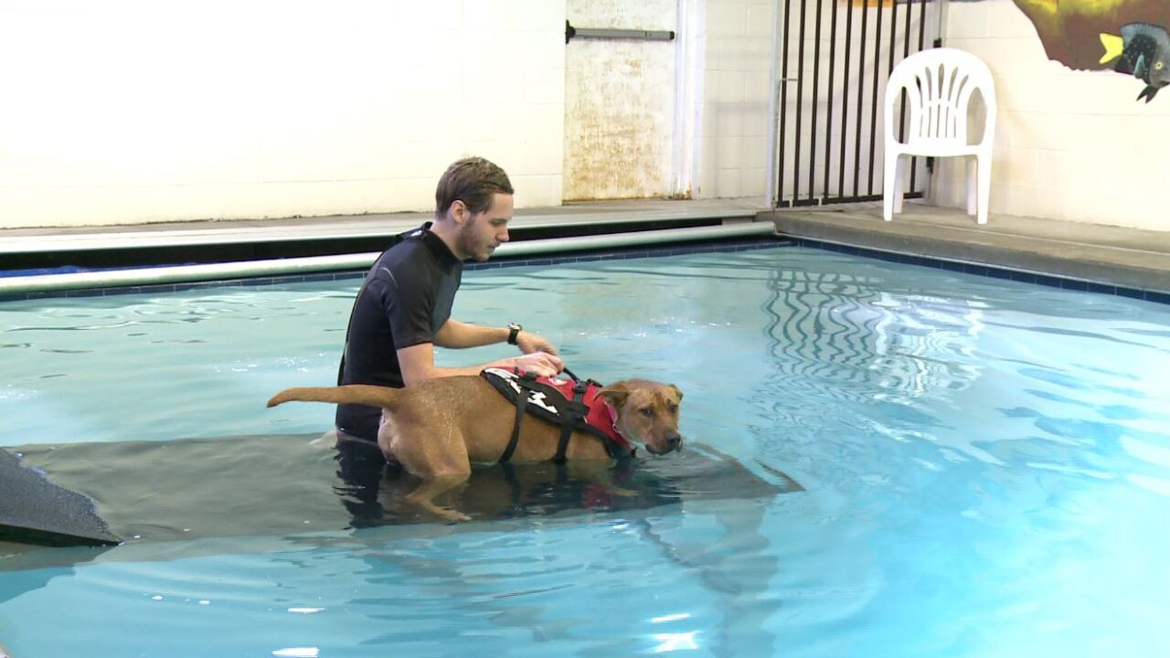 Richmond shelter dogs to take swim lessons