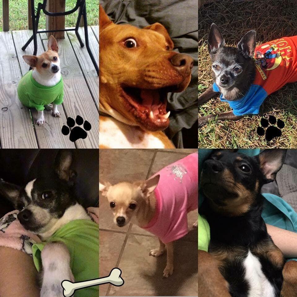 Presley, Ollie, Zander, Jasper, Mila and Olivia