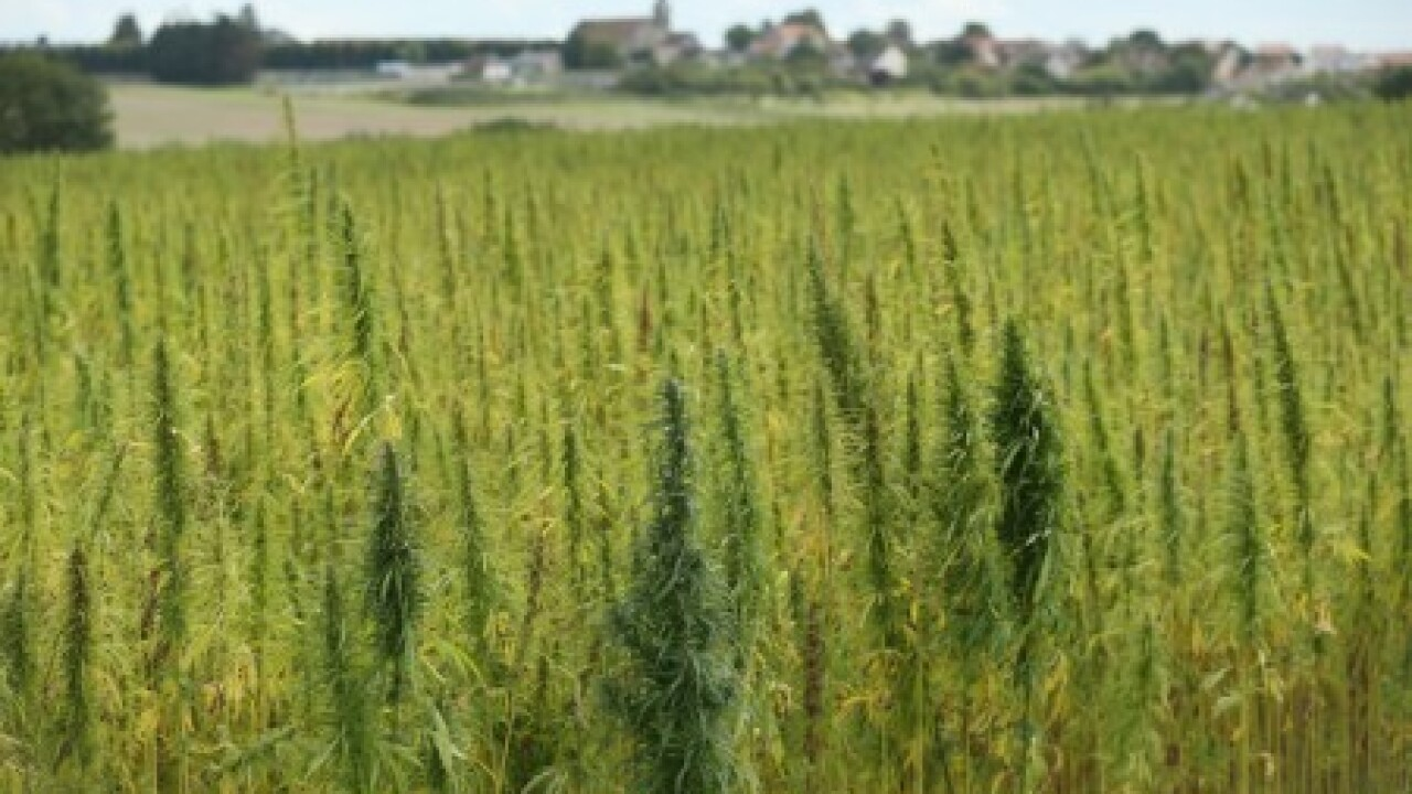 Industrial hemp bill changed to appease law enforcement