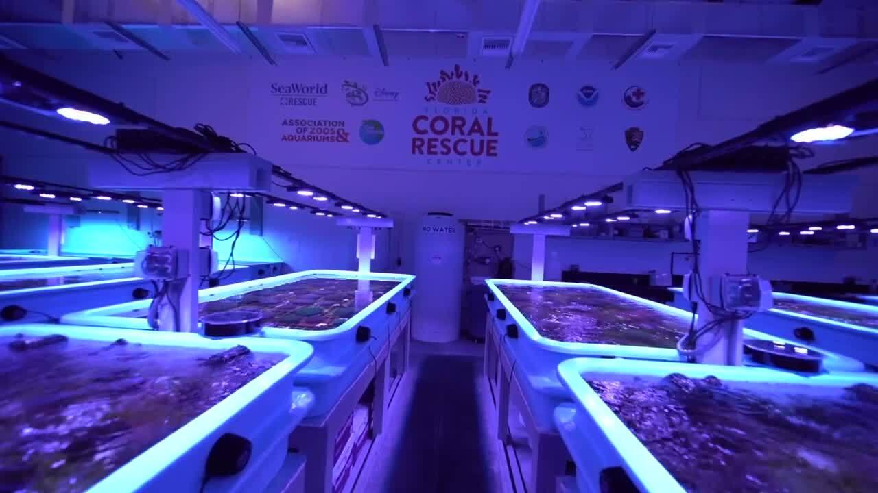 Florida Coral Rescue Center